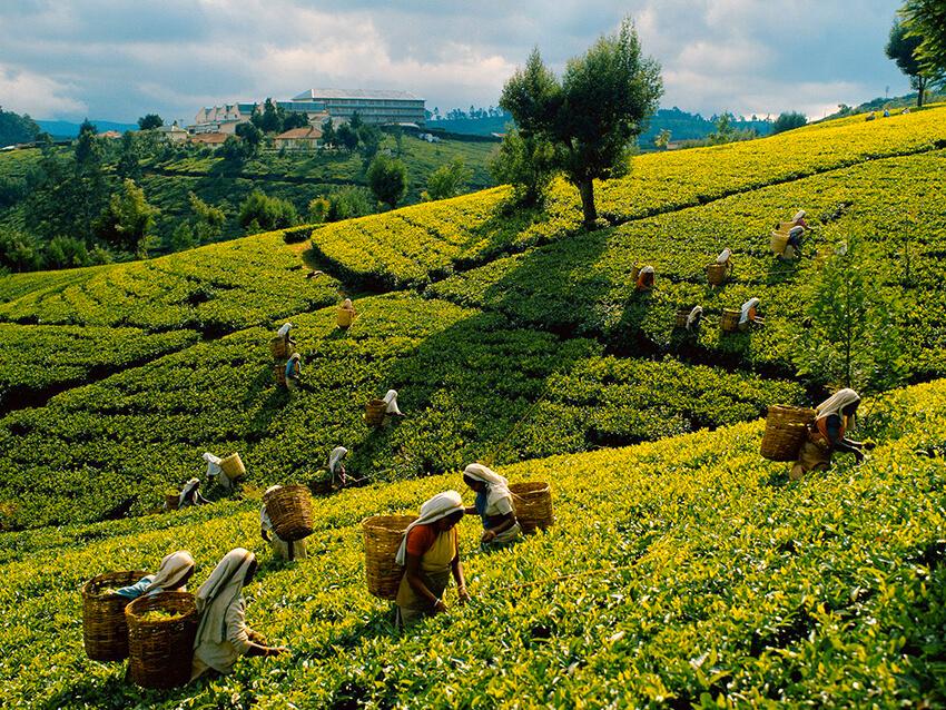 Đồi trà tại Nuwara Eliya